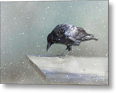 Raven In Winter Metal Print by Eva Lechner