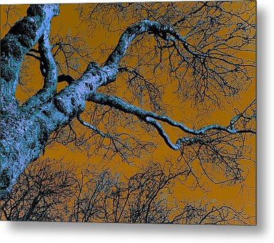 Reaching For The Skies Metal Print