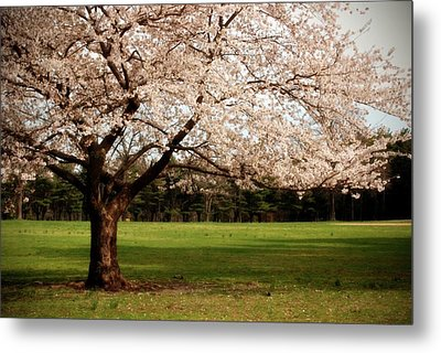 Reaching Out - Ocean County Park Metal Print by Angie Tirado
