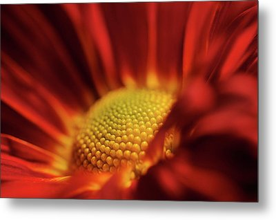 Metal Print featuring the photograph Red And Yellow by Sheryl Thomas