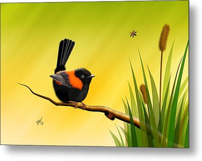 Red Backed Fairy Wren Metal Print by John Wills