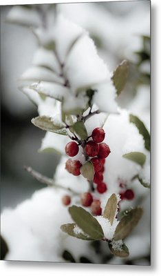 Red Berries Metal Print