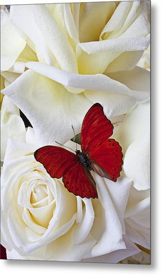 Red Butterfly On White Roses Metal Print