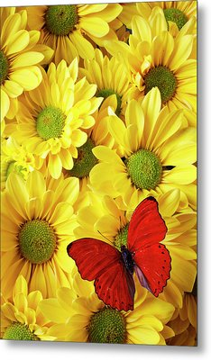 Red Butterfly On Yellow Mums Metal Print by Garry Gay