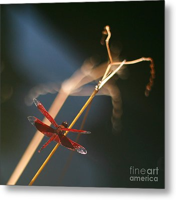 Red Dragonfly Metal Print