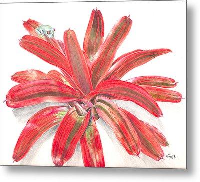 Red-eyed Tree Frog On Bromeliad Metal Print by Penrith Goff
