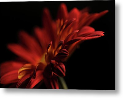 Metal Print featuring the photograph Red Flower 5 by Sheryl Thomas
