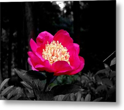 Red Flower Metal Print by Aron Chervin