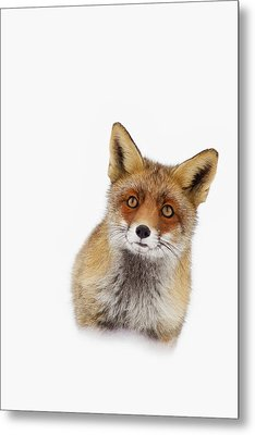 Red Fox In The Snow Portrait Metal Print by Roeselien Raimond