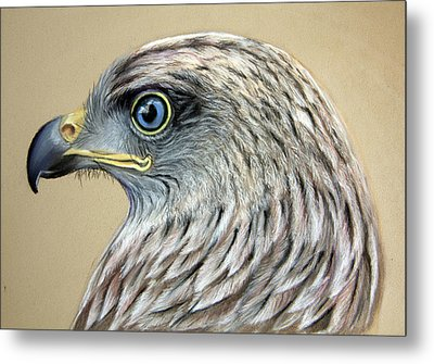 Red Kite Metal Print by Mary Mayes