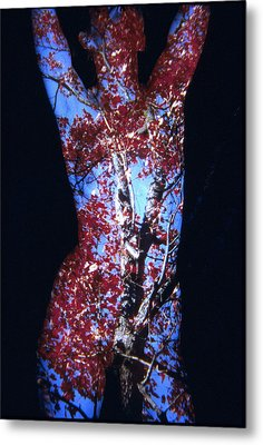 Red Maple Metal Print by Arla Patch