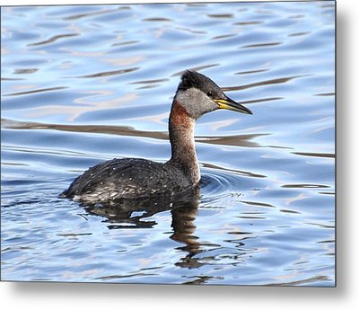 Red-necked Grebe Metal Print