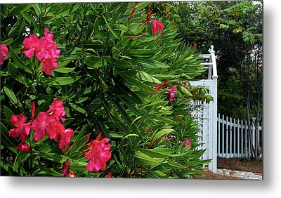 Metal Print featuring the photograph Red Oleander Arbor by Marie Hicks