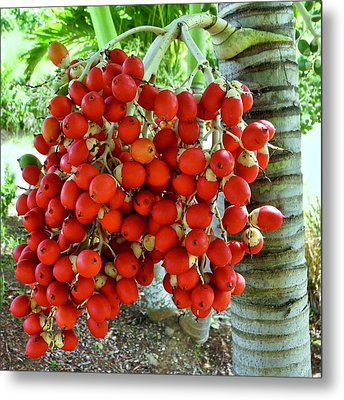 Red Palm Tree Fruit Metal Print by Kirsten Giving