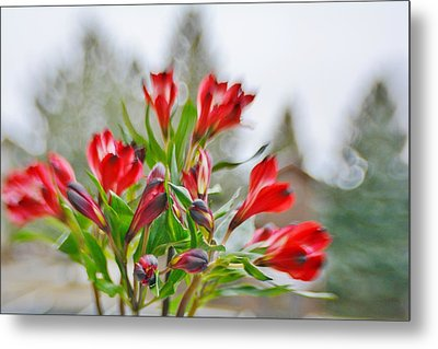 Metal Print featuring the photograph Red Peruvian Lilies by Diane Alexander