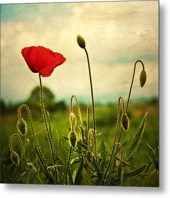 Red Poppy Metal Print by Violet Gray