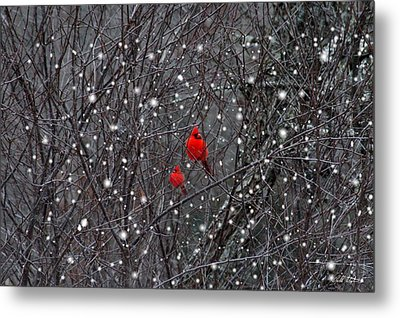 Red Snow Metal Print by Bill Stephens