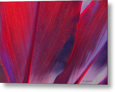 Red Ti Leaves At Last Light Metal Print