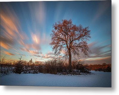 Metal Print featuring the photograph Red Tree by Davorin Mance