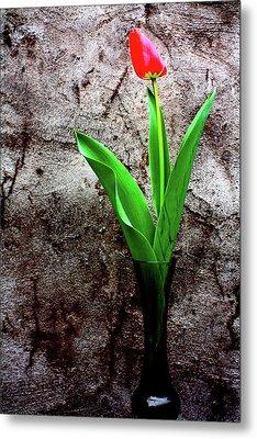 Red Tulip Metal Print by Gray  Artus