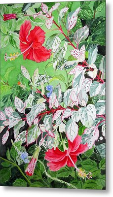 Red Variegated Hibiscus Metal Print by Vishwajyoti Mohrhoff
