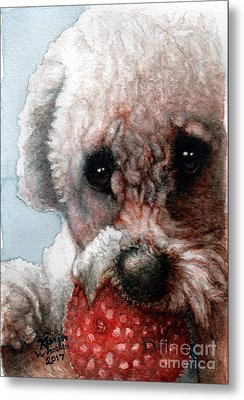 Red, White And Bella Metal Print