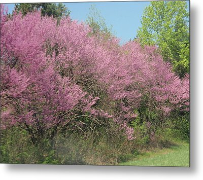 Metal Print featuring the photograph Redbuds In West Virginia by Beth Akerman