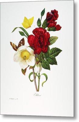 Redoute: Hellebore, 1833 Metal Print by Granger
