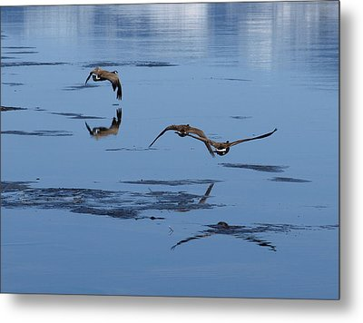 Reflecting Geese Metal Print by DeeLon Merritt