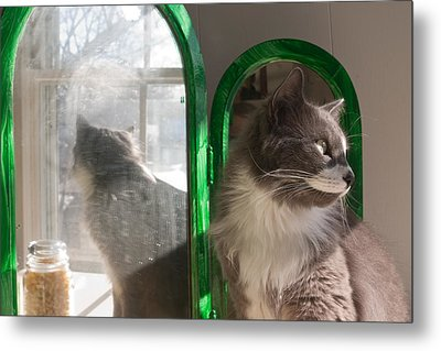 Metal Print featuring the photograph Reflection Of A Cat by David Bishop