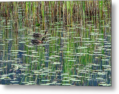 Reflections On Duck Pond Metal Print by Sharon Talson