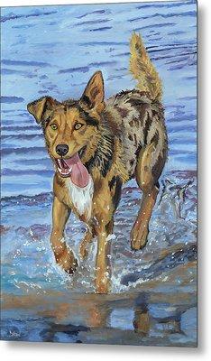 Reggie Portrait Of A Working Dog Metal Print by Kellie Straw