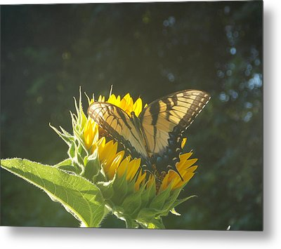 Rest Stop Metal Print by Virginia Coyle