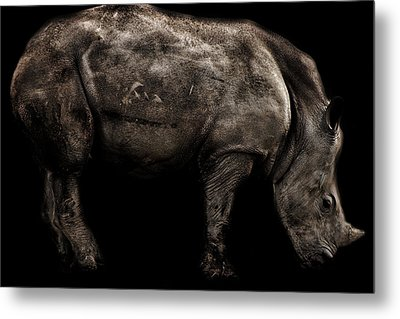 Rhino Portrait Metal Print by Martin Newman