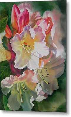Rhododendron Shadows Metal Print