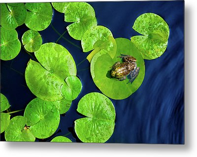 Metal Print featuring the photograph Ribbit by Greg Fortier