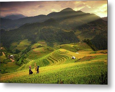 Rice Fields On Terraced Of Mu Cang Chai Metal Print