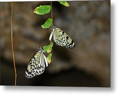 Metal Print featuring the photograph Right And Left Wings by Teresa Blanton