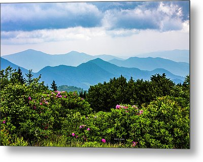 Roan Mountain Rhodos Metal Print