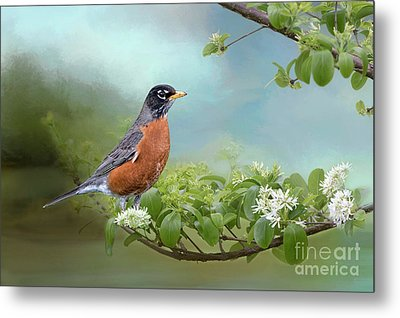 Robin In Chinese Fringe Tree Metal Print by Bonnie Barry
