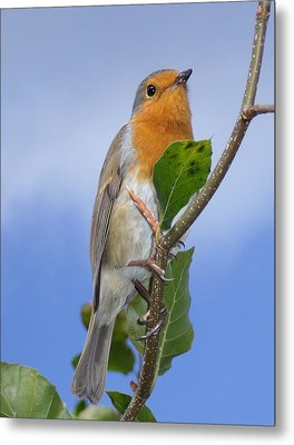 Robin In Eden Metal Print