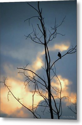 Metal Print featuring the photograph Robin Watching Sunset After The Storm by Sandi OReilly