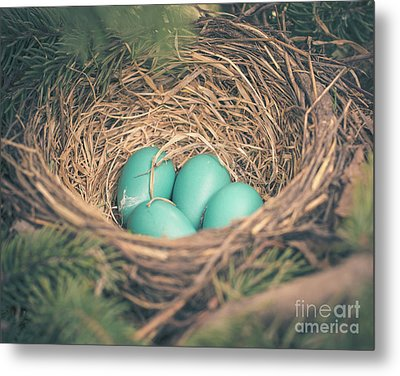 Robin's Eggs In A Nest Metal Print