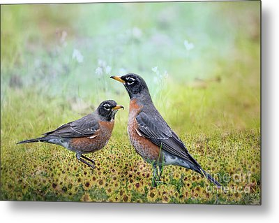 Metal Print featuring the photograph Robins, Heralds Of Spring by Bonnie Barry