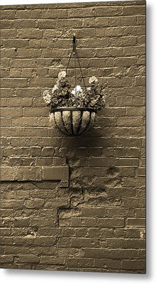 Metal Print featuring the photograph Rochester, New York - Wall And Flowers Sepia by Frank Romeo