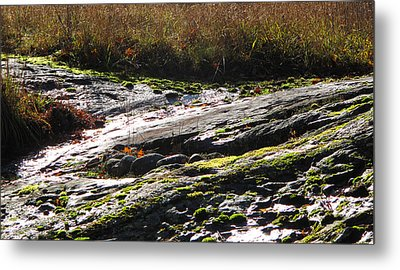 Rocks Moss And Grass 2  Metal Print by Lyle Crump