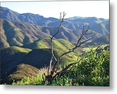 Metal Print featuring the photograph Rolling Green Hills With Dead Branches by Matt Harang