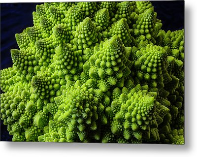 Romanesco Broccoli Metal Print by Garry Gay