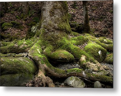 Roots Along The River Metal Print by Mike Eingle