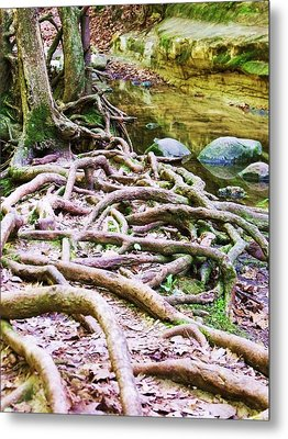 Roots And Rocks I Metal Print by Anna Villarreal Garbis